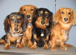 DOG HAIR STUDIO KEN
